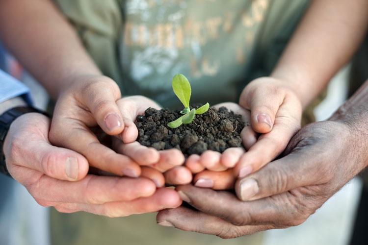 umwelt Hände pflanze